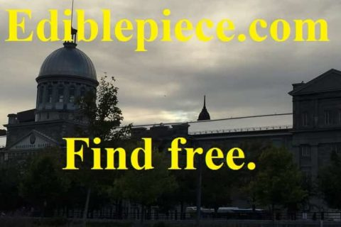 study in belgium scholarship for free